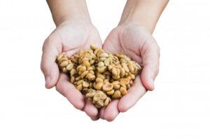 manos-ofreciendo-granos-cafe-kopi-luwak_33886-112